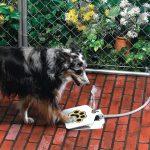 Pet Water Fountain - Поилка фонтан за куче във формата на лапа