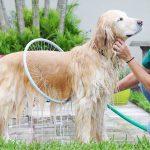 Circle Pet Washer 1 - Уред - Обръч за къпане на кучета, котки и други животни
